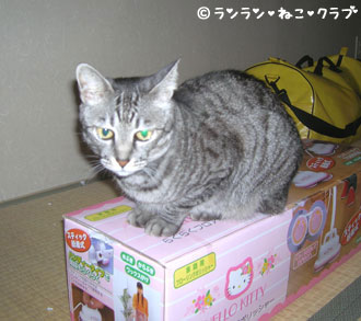 20070307gure2.jpg