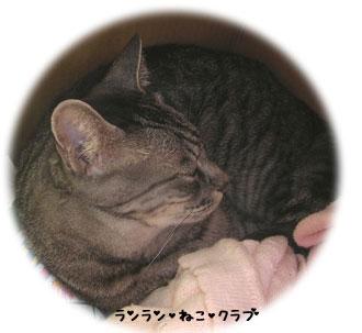 20070619gure.jpg