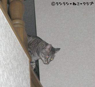 20070627gure1.jpg