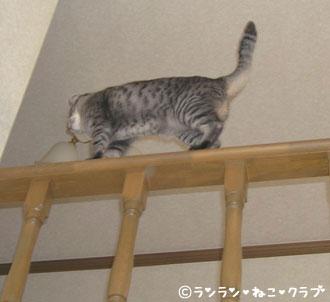 20070627gure5.jpg
