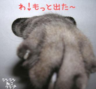 20070629gure4.jpg