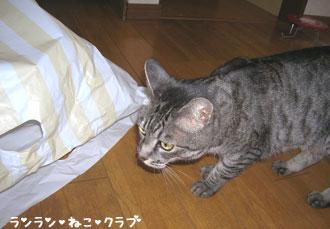20070709gure1.jpg