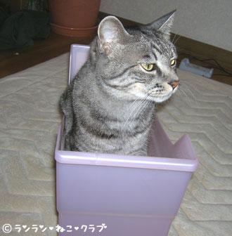 20070711gure1.jpg