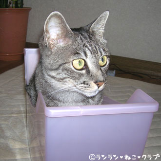 20070711gure2.jpg