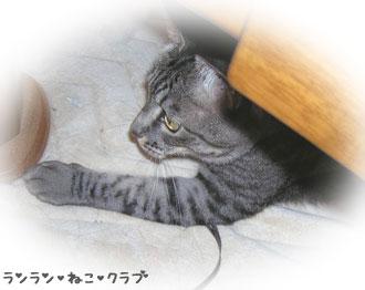 20070715gure1.jpg