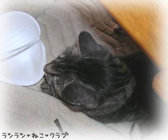 20070715gure2.jpg