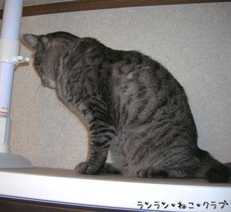 20070717gure2.jpg