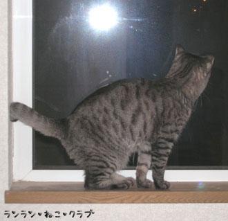 20070718gure.jpg