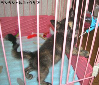20070804cocoa2.jpg