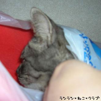 20070807gure1.jpg