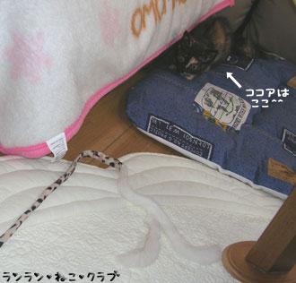 20070831cocoa1.jpg