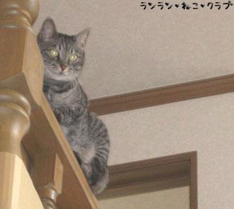 20070905gure1.jpg