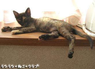 20070911cocoa11.jpg