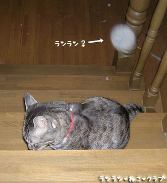20071101gure1.jpg