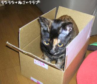 20071104cocoa4.jpg