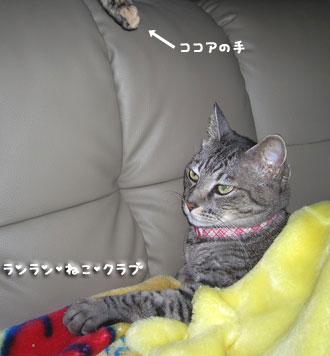 20071113gure1.jpg
