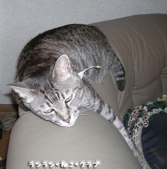 20071117gure2.jpg