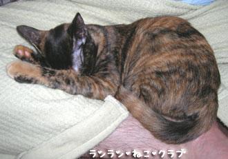 20071206cocoa3.jpg
