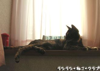 20071211cocoa1.jpg