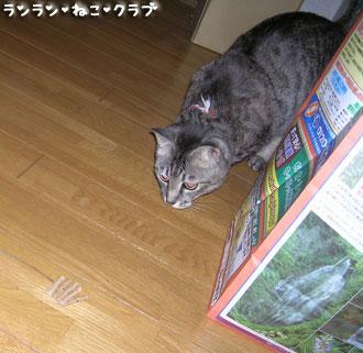 20071218gure1.jpg