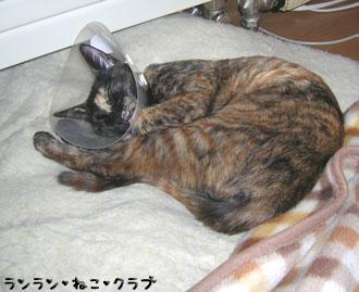 20071221cocoa1.jpg