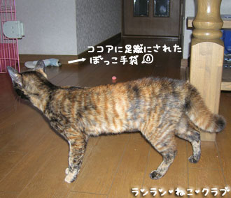 20080113cocoa2.jpg