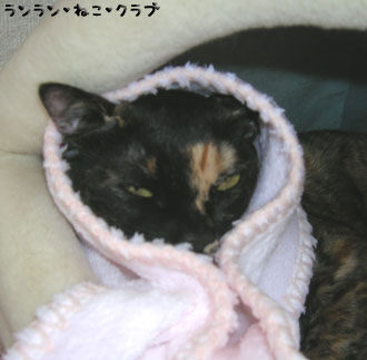 20080121cocoa1.jpg
