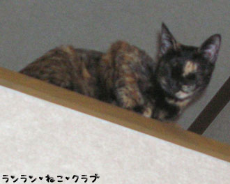 20080128cocoa1.jpg