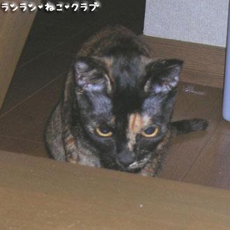20080228cocoa1.jpg