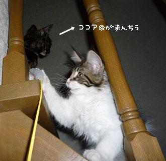 20080515cocomaro1.jpg