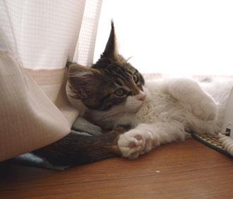 20080519cocomaro5.jpg