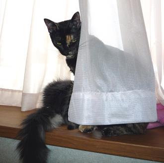 20080614cocomaro10.jpg