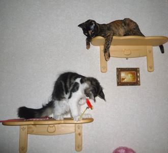 20080617cocomaro1.jpg