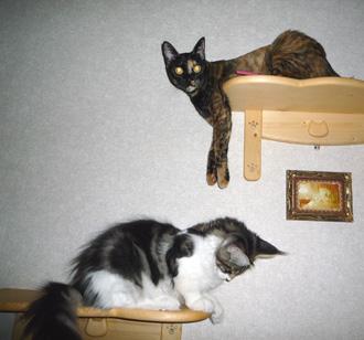 20080617cocomaro2.jpg