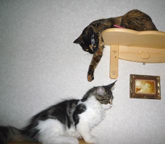 20080617cocomaro4.jpg