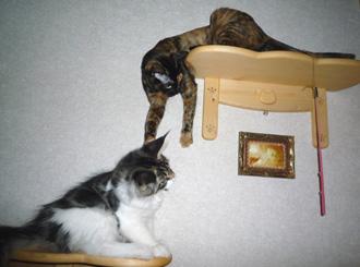 20080617cocomaro5.jpg