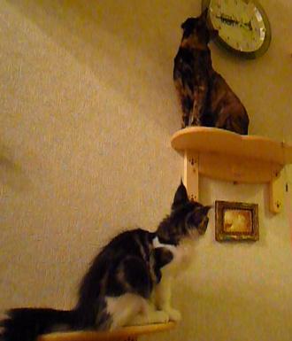 20080617cocomaro6.jpg