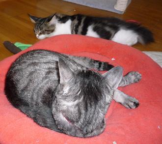 20080620guremaro1.jpg