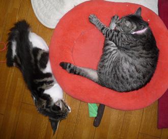 20080620guremaro2.jpg