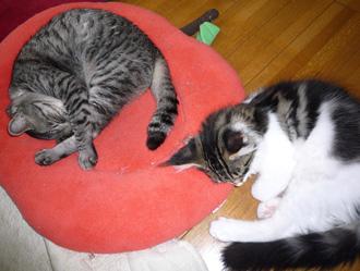 20080620guremaro4.jpg