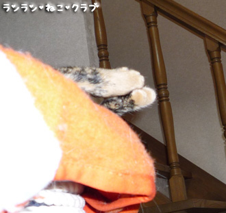 20080629cocoa1.jpg