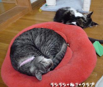 20080703guremaro1.jpg