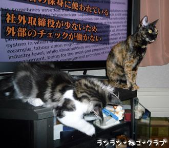 20080704cocomaro1.jpg