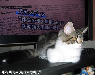 20080704cocomaro2.jpg