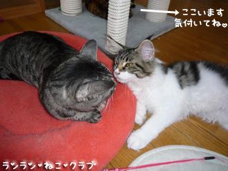 20080705guremaro1.jpg