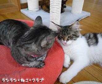 20080705guremaro3.jpg