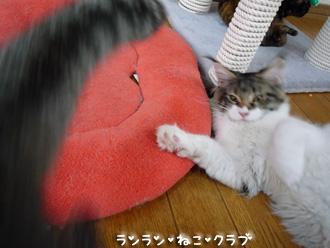20080705guremaro5.jpg