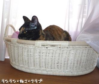 20080706cocoa5.jpg