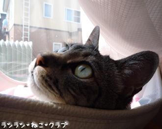20080713gure4.jpg