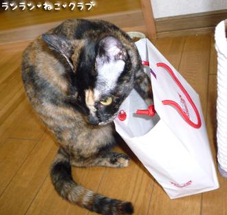 20080716cocomaro1.jpg